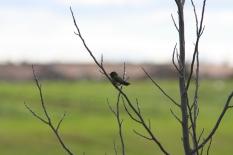 Wee Birdie
